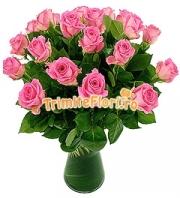 Valentine roz