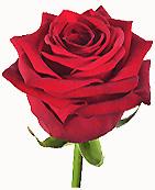 buchete Trandafiri